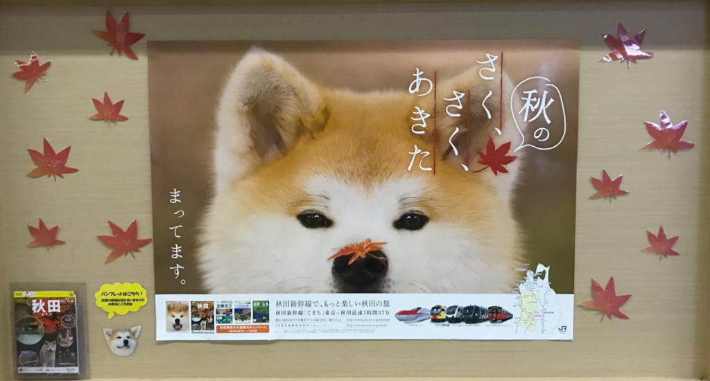 「秋の、さく、さく、あきた」キャンペーン 秋田犬
